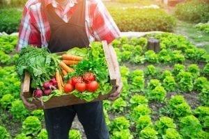 野菜も光合成して二酸化炭素を酸素に変えてくれる!