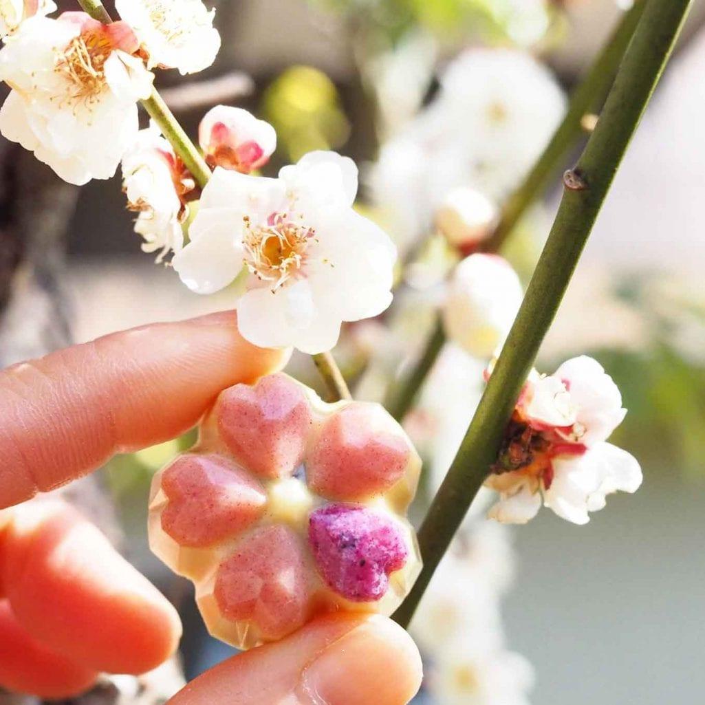 桜のローチョコレート。春色
