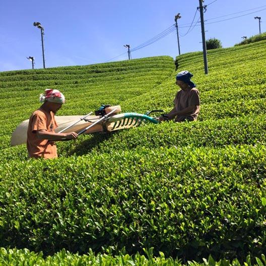 茶楽園の無農薬ほうじ茶の通販
